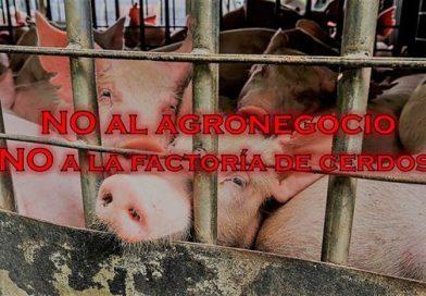 Agroindustria: rotundo rechazo a la factoría de cerdos